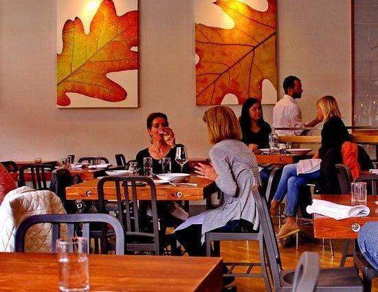Oak at Fourteenth: Lunch under the oak leaves