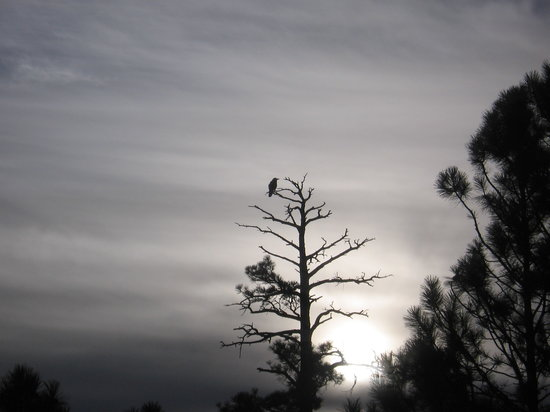 Lincoln National Forest: Dawn's early light; raven's delight!
