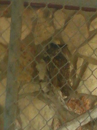 Animal World and Snake Farm Zoo: owl