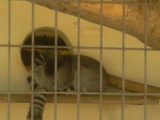 Animal World and Snake Farm Zoo: small furry animal? lol