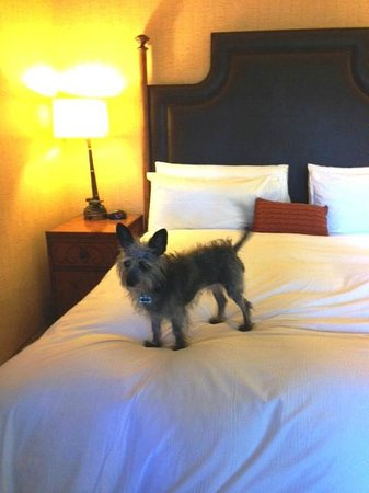Lake Arrowhead Resort and Spa, Autograph Collection : Dog friendly room with comfy bed