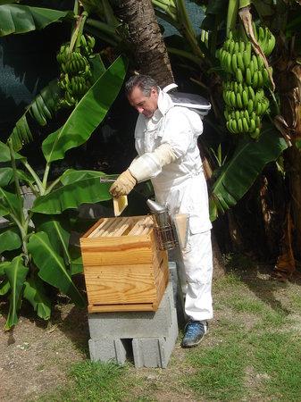 apiculteur 68