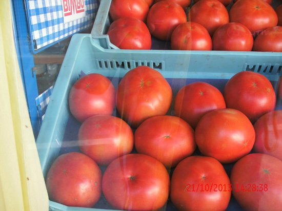 Caribbean Bay: Look at the size of these Tomatoes