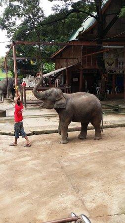 Elephantstay : Awesome elephants they will amaze you