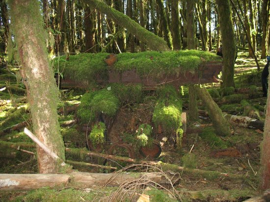 Moresby Explorers - Day Tours : Old logging site