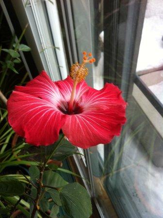 Repos & Manna B & B: Enjoy our beatiful flower arrangement