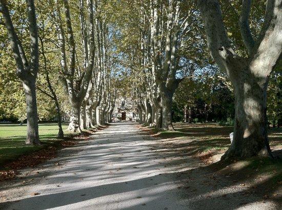 Le Chateau des Alpilles : The driveway of Chateau des Alpilles