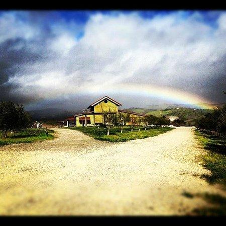 Kiler Ridge Olive Farm: Rainbow over our frantoio