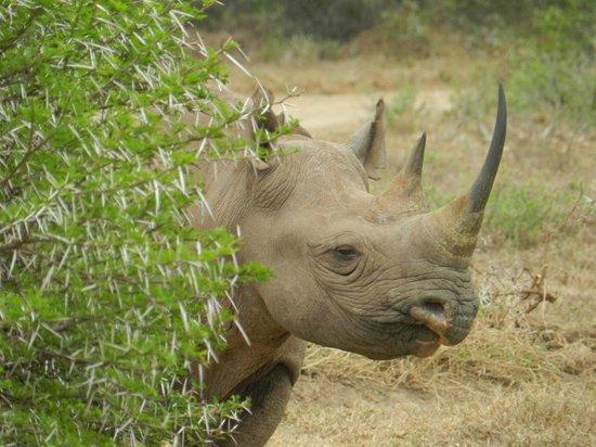 Shamwari Game Reserve Lodges: Rhino