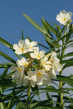 Pineapple Beach Club Antigua: Flowers!
