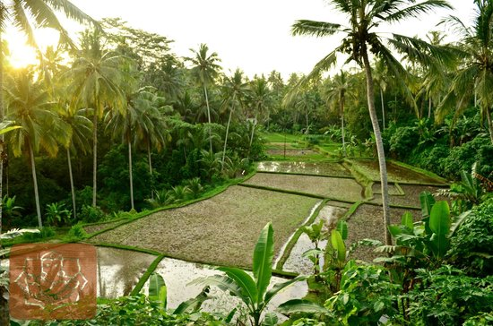 Ubud Vacation -  Private Tour