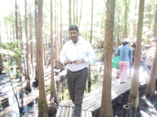 Jiangjun Mountain: In the swamp