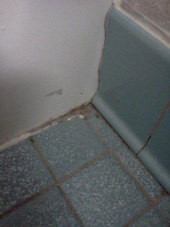 BEST WESTERN Royal Plaza Hotel & Trade Center: unclean bathroom