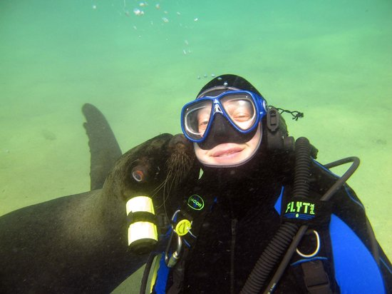 Scuba Diving Adventures : Sea Lion Dive