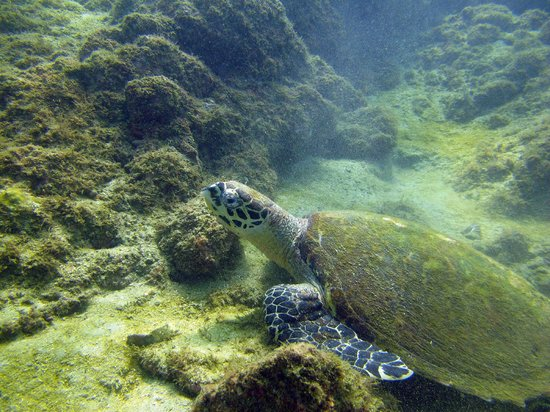Scuba Diving Adventures : Sea Turtle