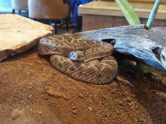 The Westin Kierland Resort & Spa: Rattle Snake in Lobby
