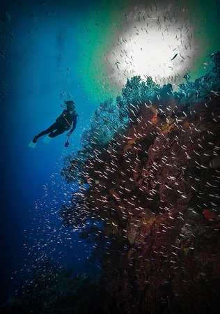 Cobalt Coast Grand Cayman Resort: SCUBA diver Sally Herschorn explores Ghost Mountain on the North Shore of Grand Cayman