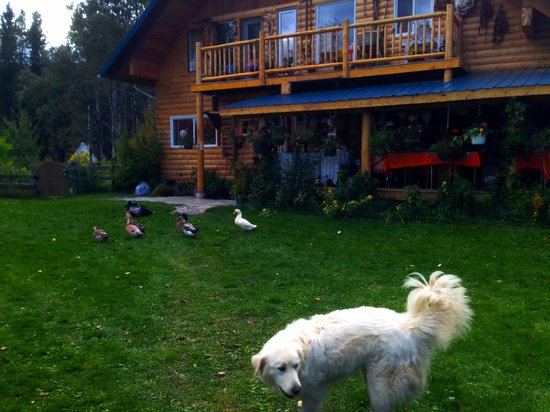 Teepee Meadows Guest Cottages: big house and ducks