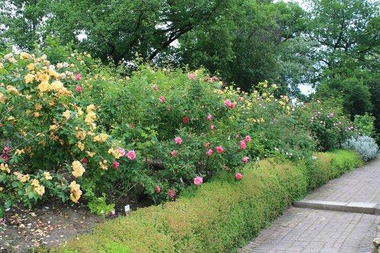 Europa Rosarium: Shrub roses (a few of the hundreds of varieties)