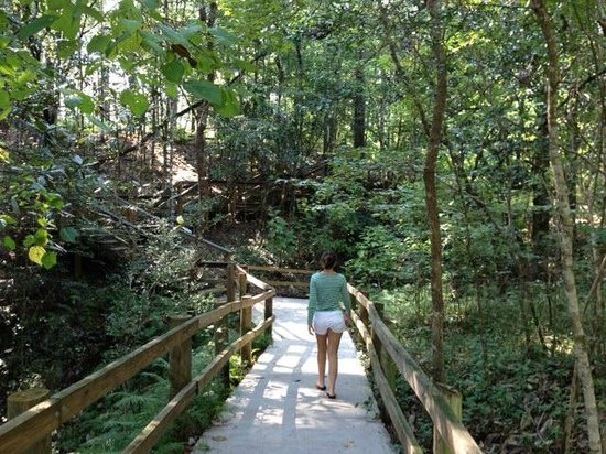 Trail - Picture of Falling Waters State Park, Chipley ...