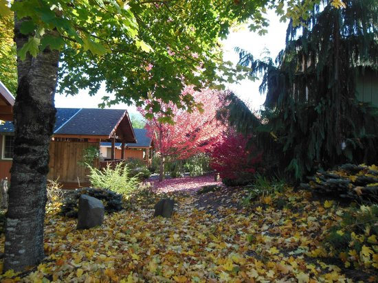 Carson Ridge Luxury Cabins: October