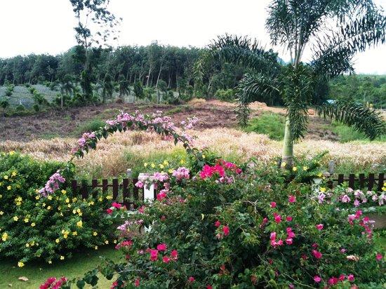 Leelawadee Garden Resort: Gartenanlage