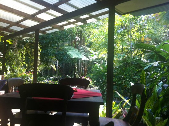Cape Trib Farmstay B&B: where we would enjoy our breakfast/ cups of tea