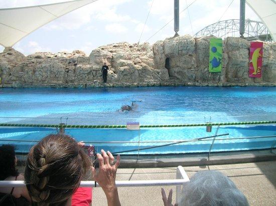 Texas State Aquarium : Шоу дельфинов