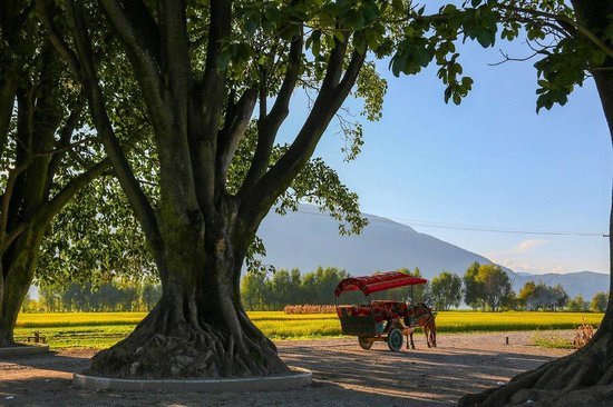 The Linden Centre : Taking a horse drawn carriage tour in the Xizhou countryside