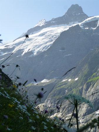 Grindelwald, İsviçre: наслаждение прекрасными видами.