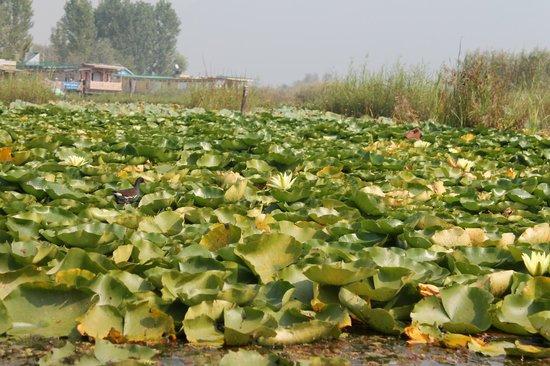 Golden Hopes Group Of Houseboats : lotus lake