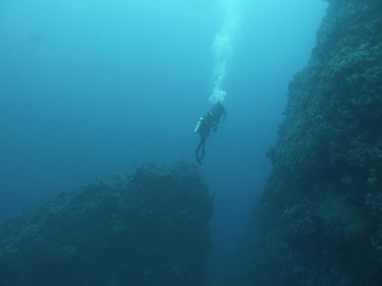 Adventure Scuba Diving Bali: On the wall