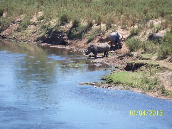 River House Lodge: Rhinos at the river