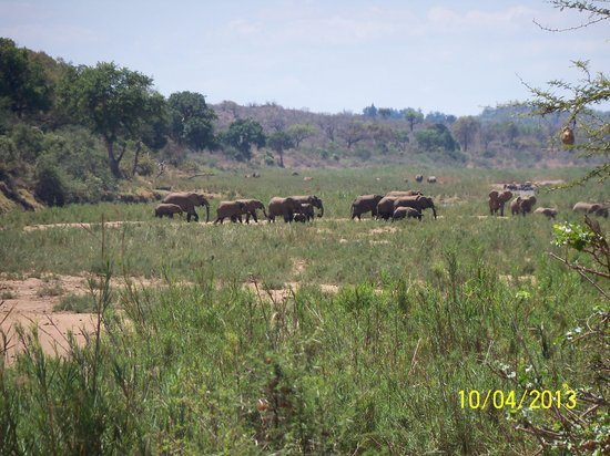 River House Lodge: and some elefants