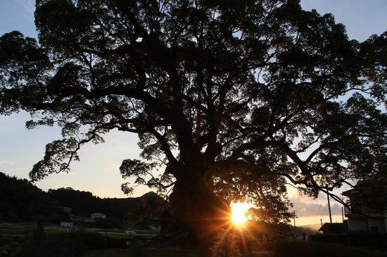 Kawagono Okusu: 川古の大楠と夕日