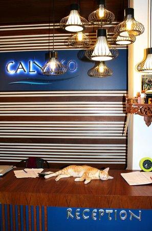 Calypso Patong Hotel: Стойка ресепшна