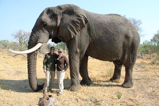 Sanctuary Baines' Camp: Living with Elephants, Botswana