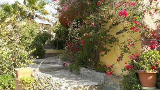 Villa Galini : Gardens
