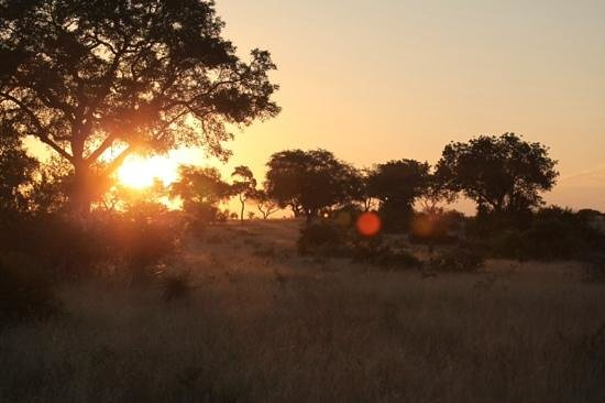 Londolozi Varty Camp : beautiful sunset in Londolozi