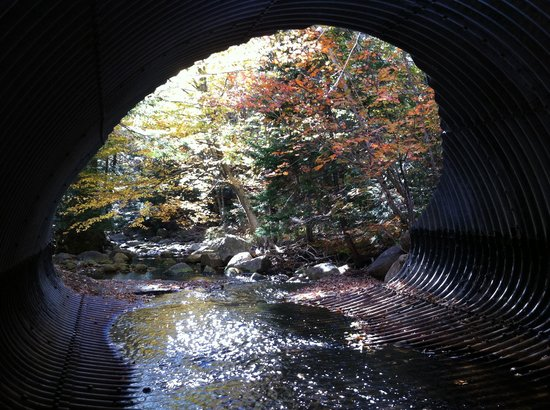 Golden Eagle Lodge: Foliage in a tunnel view