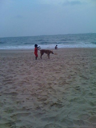 Alor Grande Holiday Resort: Пляж представляет собой смесь детей и собак! Весело очень!