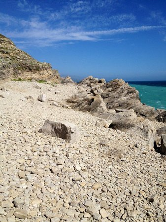 South West Coast Path- Lulworth Cove & The Fossil Forest Walk: Fossil forest walk