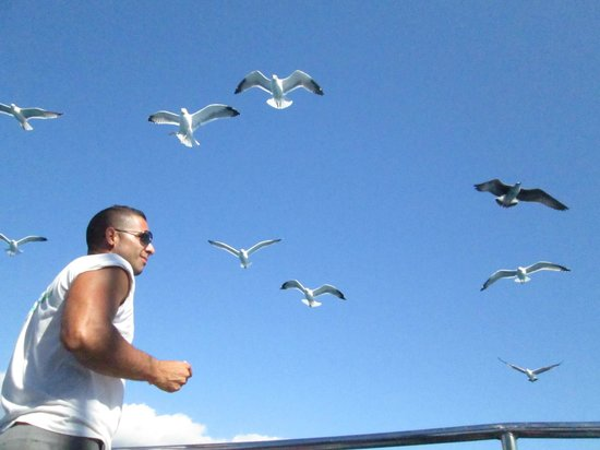 Eden Catamaran: cibo ai gabbiani