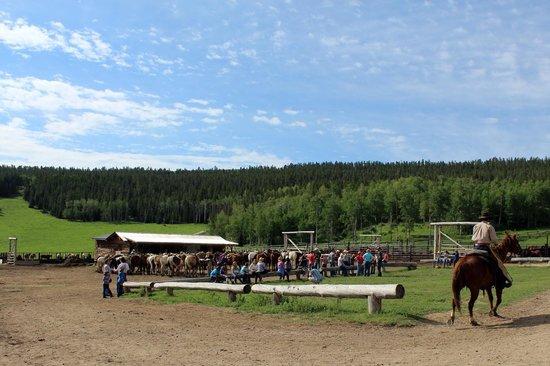 Paradise Guest Ranch: Paradise Ranch