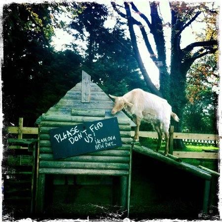 The Grove Pantry Pub & Inn: THE FRIENDLY GOAT