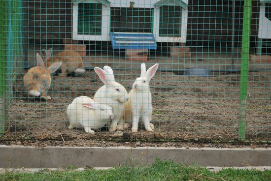Horas Family Home : Rabbit Farm