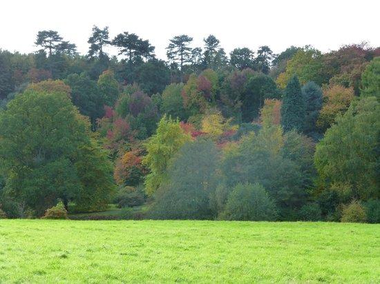 Winkworth Arboretum: Winkworth