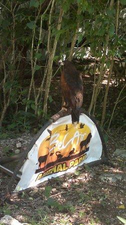 Bel Air Collection Xpu Ha Riviera Maya: show de los animales