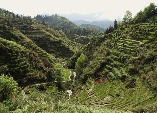 Longjiang County, Китай: Dragon's Backbone Rice Terraces