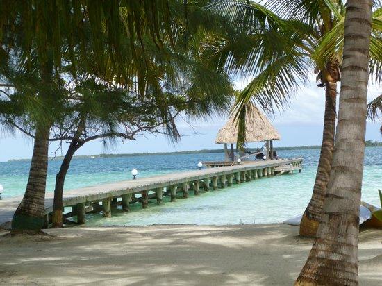 Belizean Dreams: Coco Plum